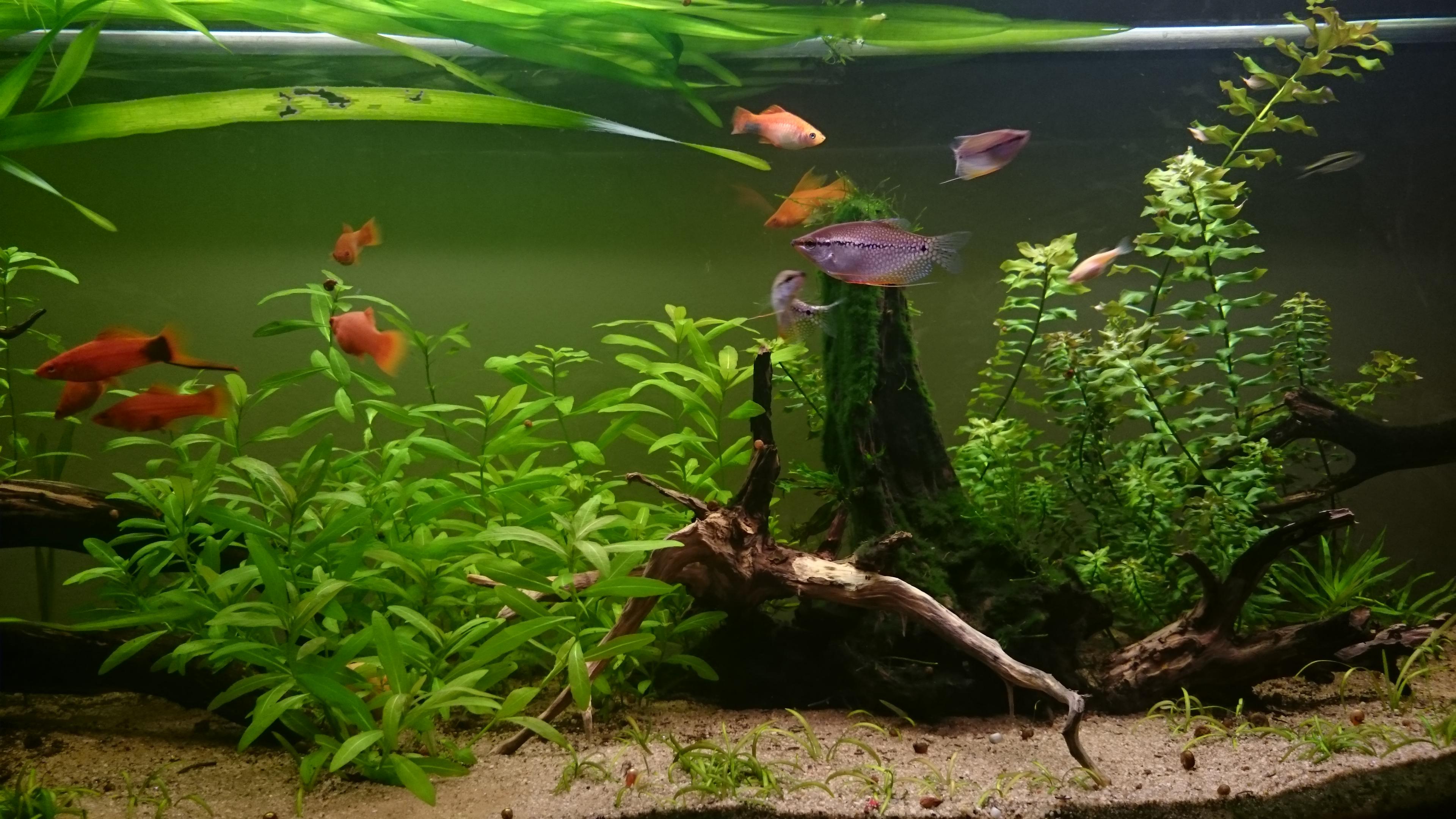 El acuario plantado de daniel decorpez acuario for Todo para acuarios